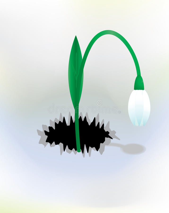 Vector Background With Snowdrop Stock Photography
