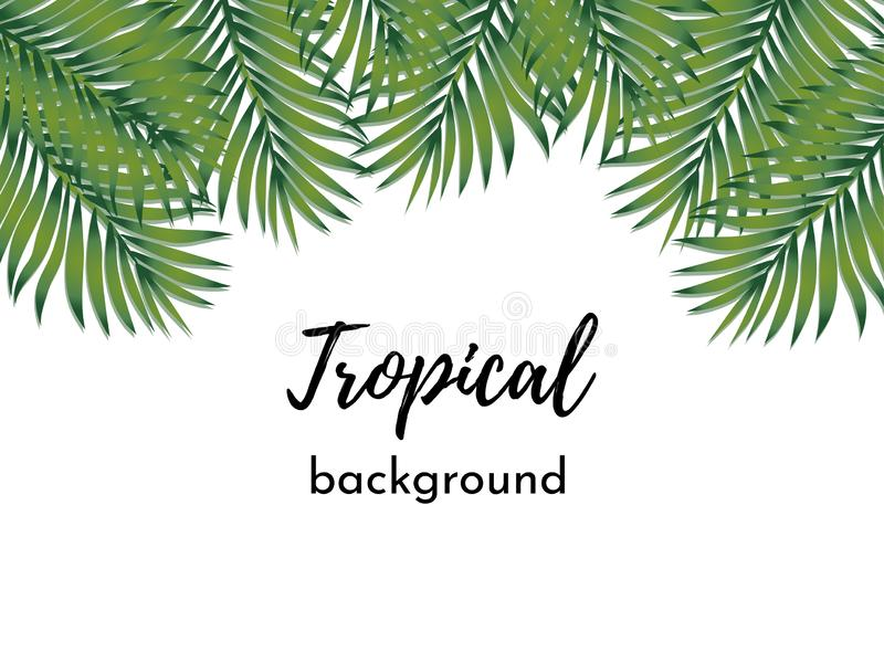 Vector background. Template with isolated frame green exotic tropical palm leaves vector illustration