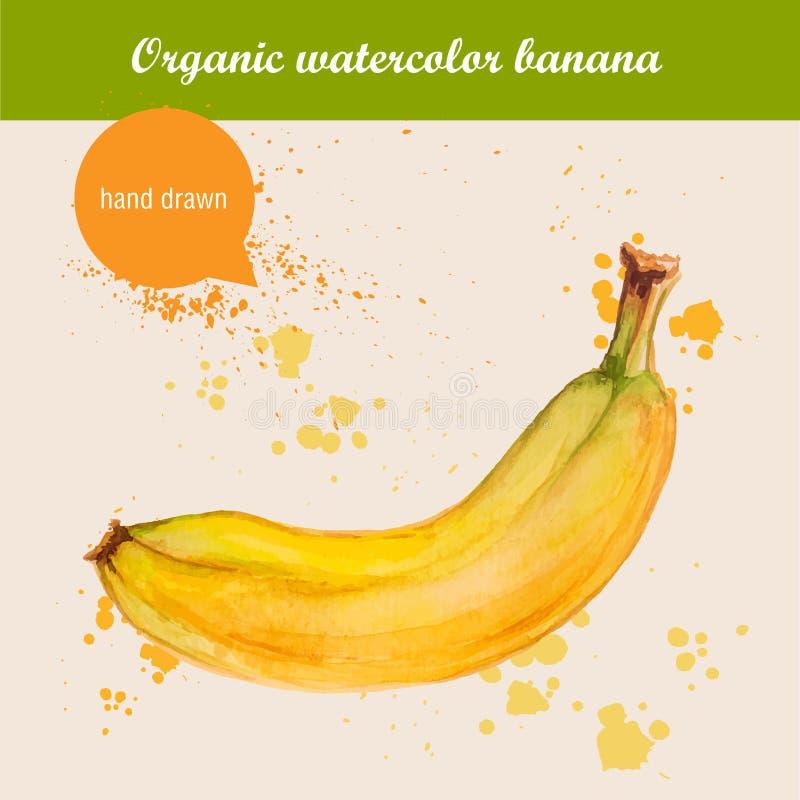 Vector a banana tirada mão da aquarela com gotas da aquarela ilustração stock