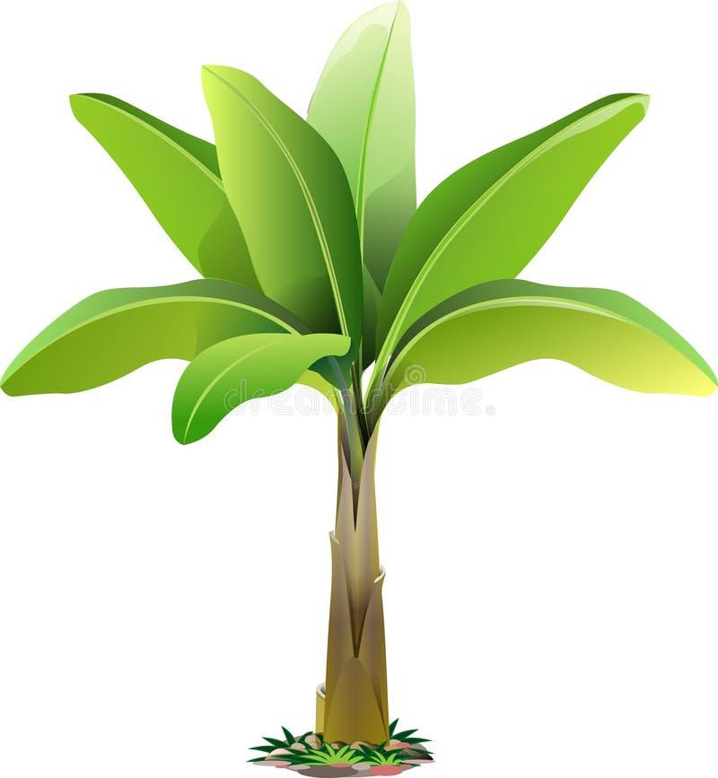 vector banana tree stock vector illustration of graphic 77427829 rh dreamstime com banana tree plant clipart banana tree clipart