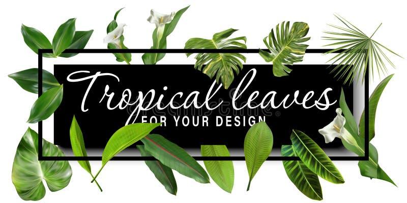 Vector bandeiras tropicais horizontais das folhas no fundo branco Projeto bot?nico ex?tico para cosm?ticos, termas, perfume ilustração stock