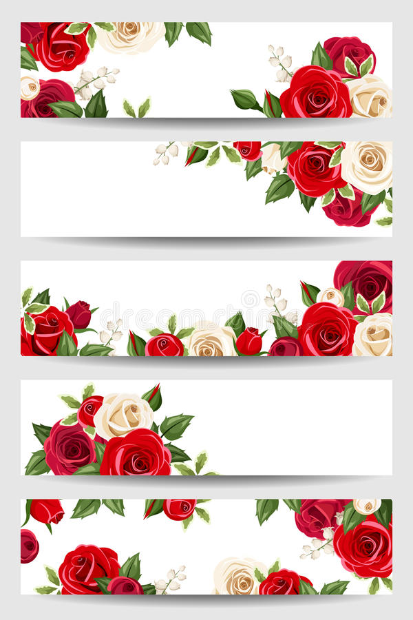 Vector banners with red and white roses. vector illustration