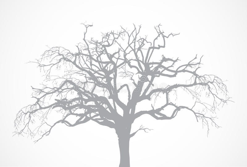 Vector bare old dry dead tree silhouette without l. Bare old dry dead tree silhouette without leaf. Vector oak crown