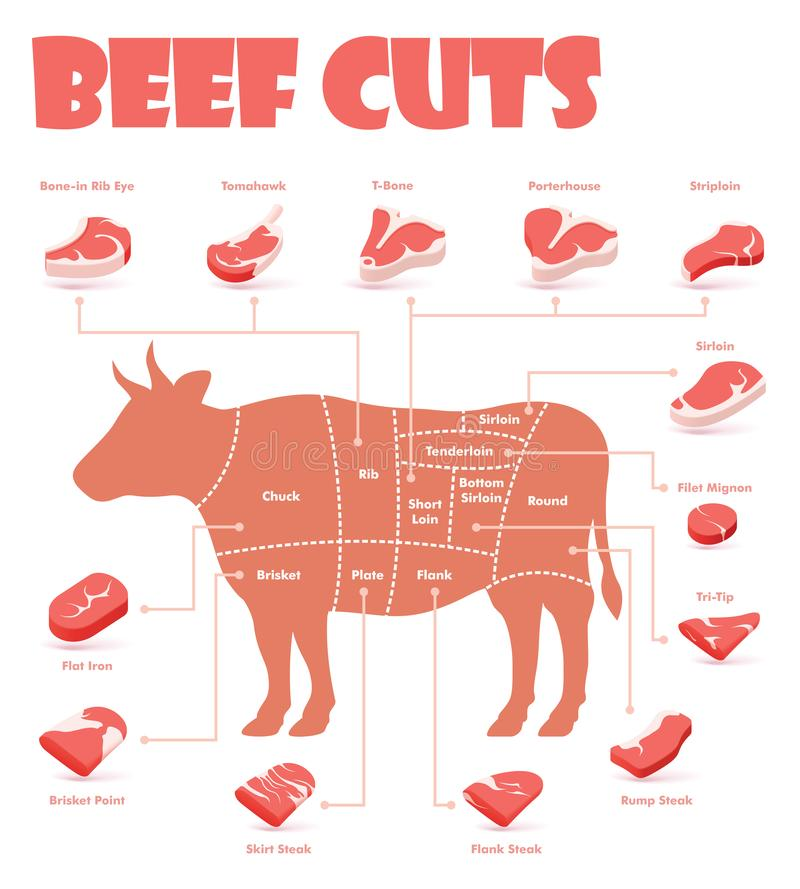 Vector beef cuts chart. And pieces of beef, used for cooking steak and roast - t-bone, rib eye, porterhouse, tomahawk, filet mignon, striploin, sirloin, tri-tip vector illustration