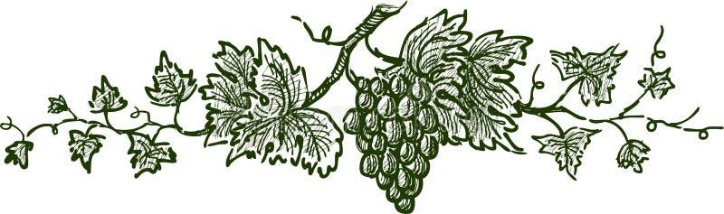 De tak van de druif vector illustratie