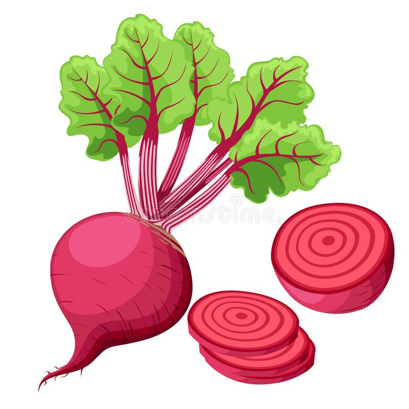 Vector beets isolated on background. Red beetroot whole, cut, sliced. Set of fresh beets in different forms. flat icon design. Web stock illustration