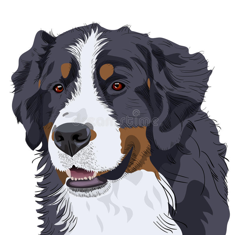 Vector Bernese Mountain Dog Breed Royalty Free Stock Image