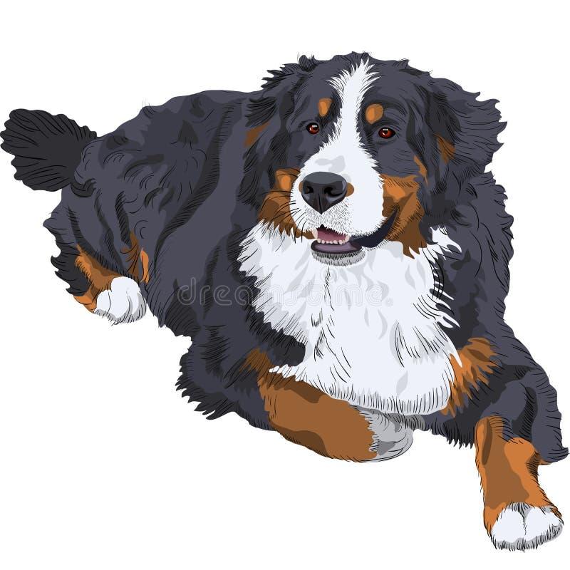 Vector Bernese Mountain Dog breed stock illustration