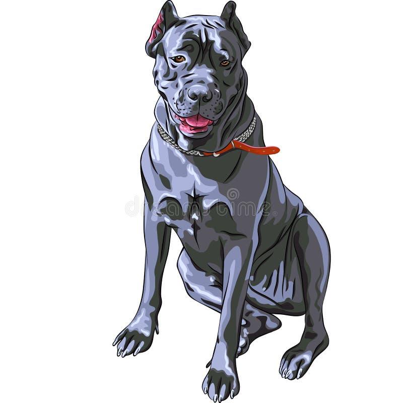 vector Black Cane Corso dog smiling vector illustration