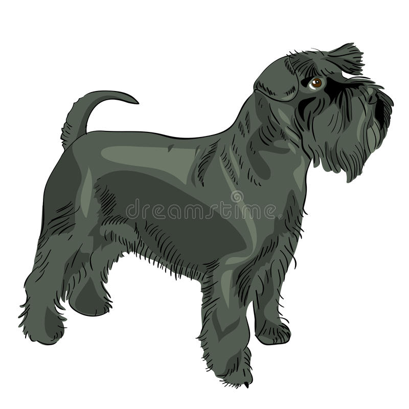 Download Vector Black Miniature Schnauzer Dog Stock Vector - Illustration: 20796012