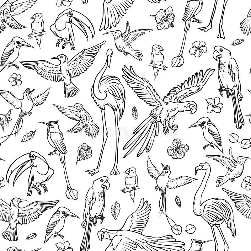 Vector black and white sketch set drawn by hand. Seamless pattern exotic tropical birds and flowers. Isolated outline vector illustration