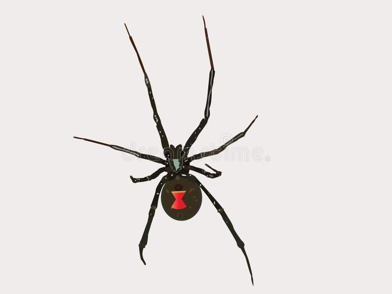 Download Vector Black Widow Spider stock vector. Image of poisonous - 17643830