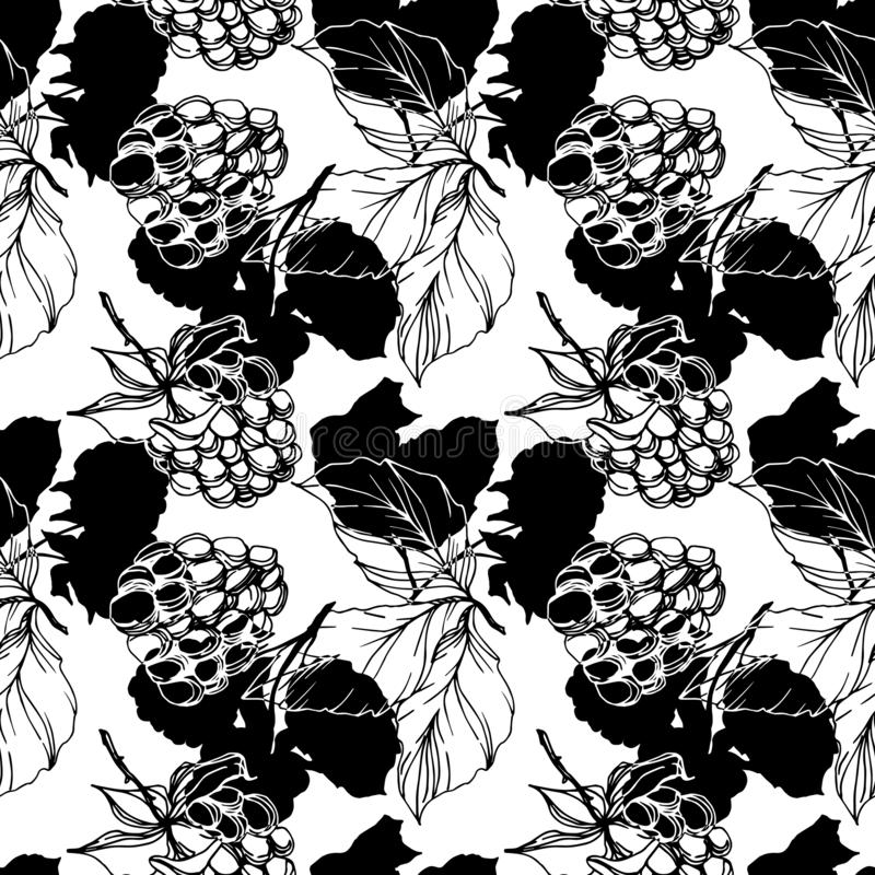 Vector Blackberry healthy food. Black and white engraved ink art. Seamless background pattern. Fabric wallpaper print texture on white background royalty free illustration