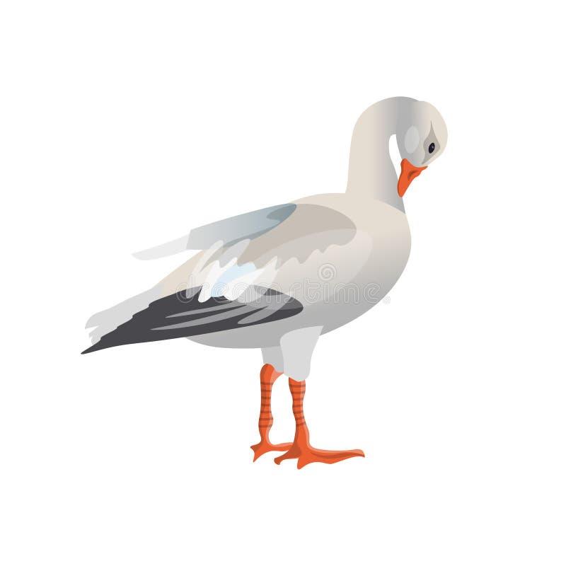 Vector blanco del ganso ilustración del vector
