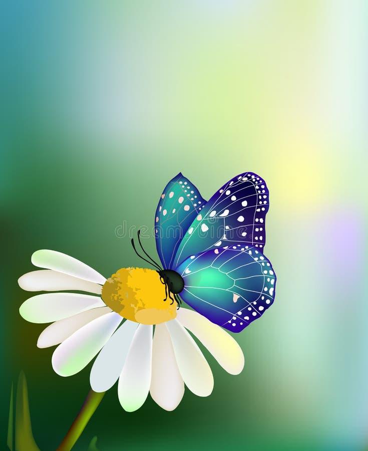 Vector blauwe vlinder op de madeliefje-bloem royalty-vrije illustratie