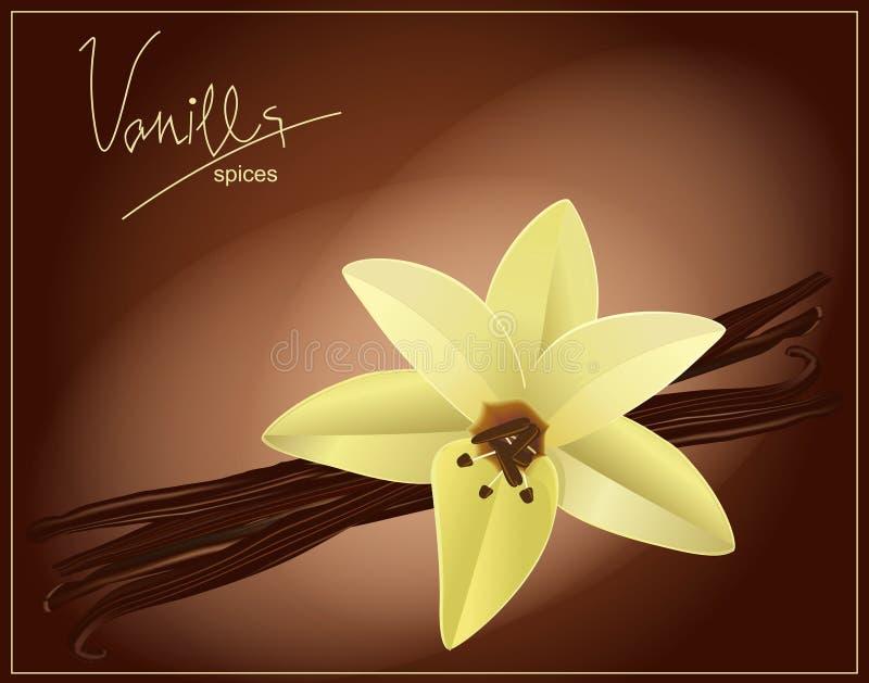 Vector bloem en vanillepeulen royalty-vrije illustratie