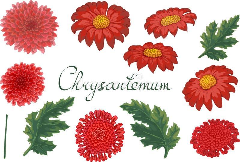 Vector bloemenillustratie met chrysant royalty-vrije illustratie