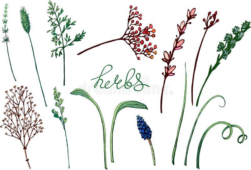Vector bloemenillustratie met kruiden stock illustratie