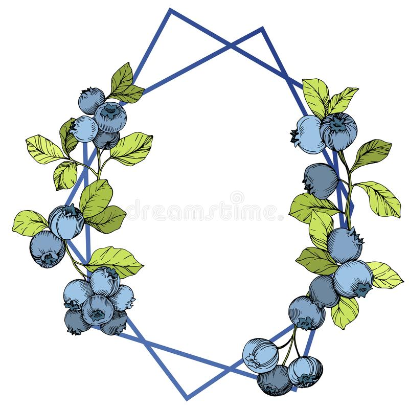 Vector Blueberry blue and green engraved ink art. Berries and green leaves. Frame border crystal ornament square. stock illustration