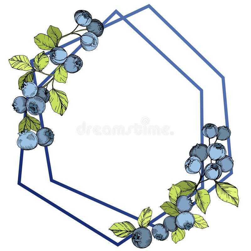 Vector Blueberry blue and green engraved ink art. Berries and green leaves. Frame border crystal ornament square. vector illustration