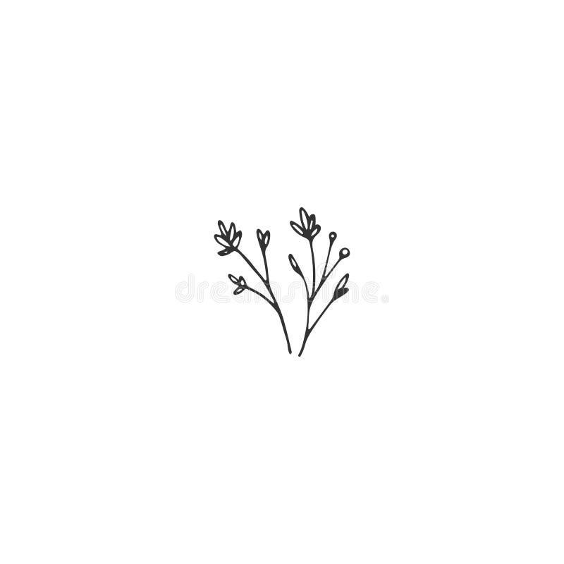 Vector Blumenhand gezeichnetes Element in der eleganten und minimalen Art vektor abbildung
