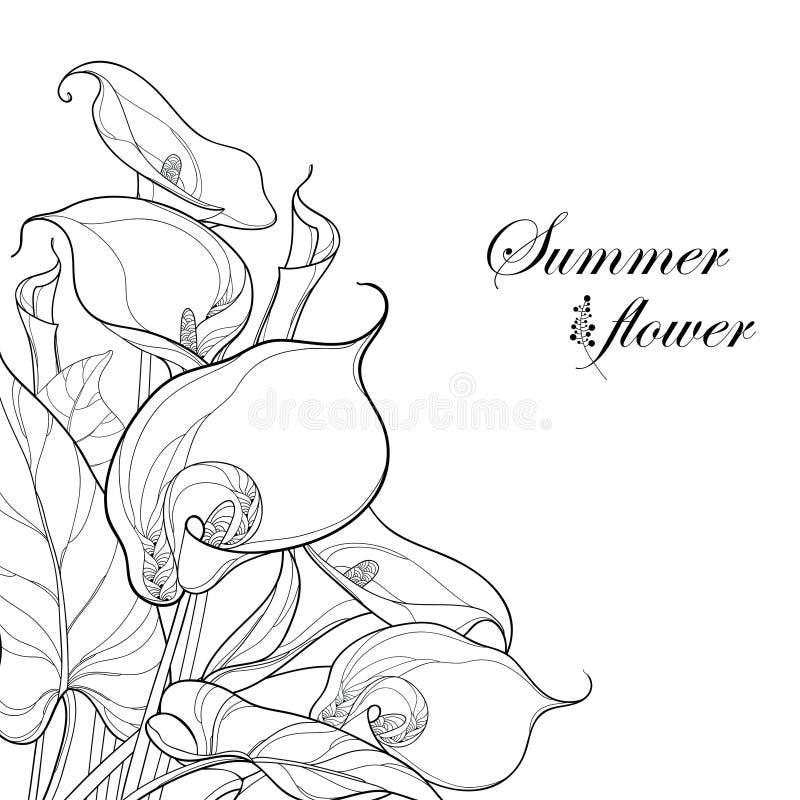 Vector Blumenstrauß mit Callalilienblume oder Zantedeschia im Schwarzen auf weißem Hintergrund Eckzusammensetzung in der Konturna lizenzfreie abbildung