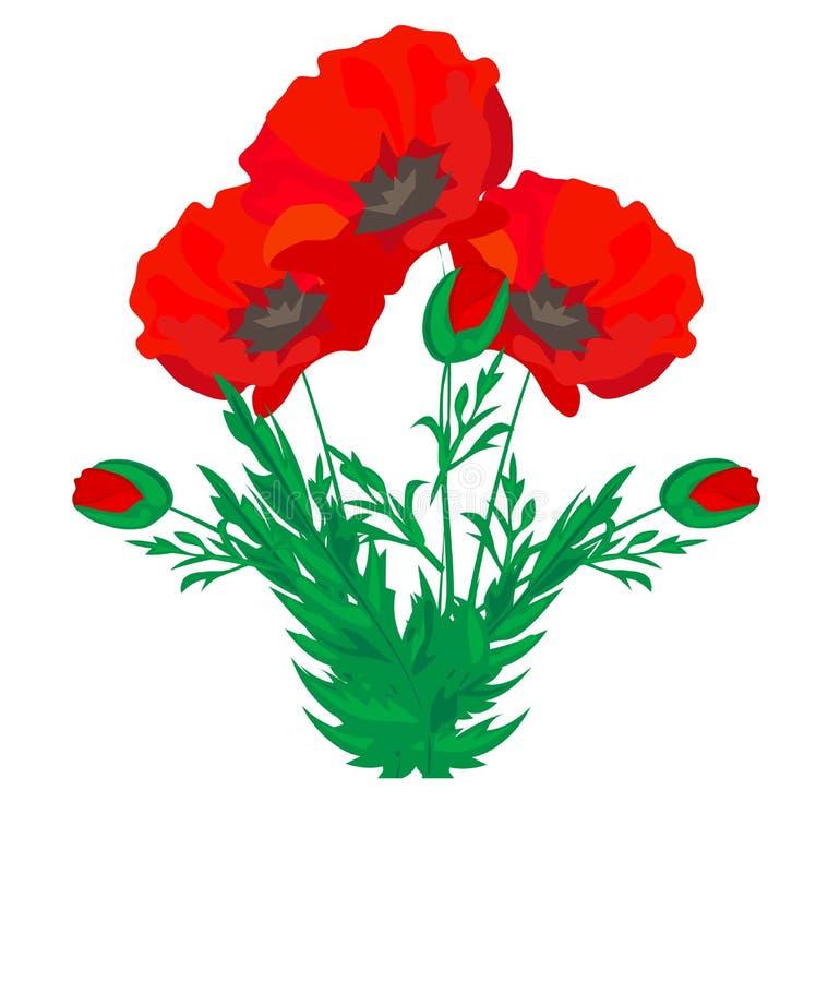 Vector Boeket van bloemen Bloeiende rode die papaver ontluikt het bloem-vlinder lieveheersbeestje bladeren op wit worden ge?solee stock illustratie