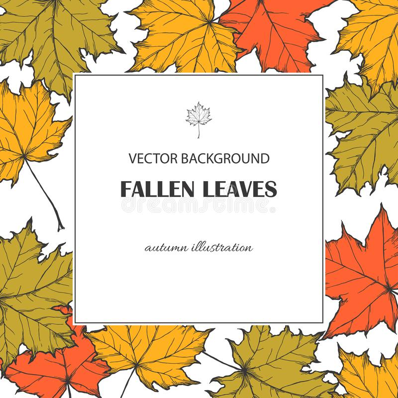 Vector botanical background with fallen maple leaves isolated on white. Hand drawn texture with autumn foliage. Vector botanical background with fallen maple vector illustration
