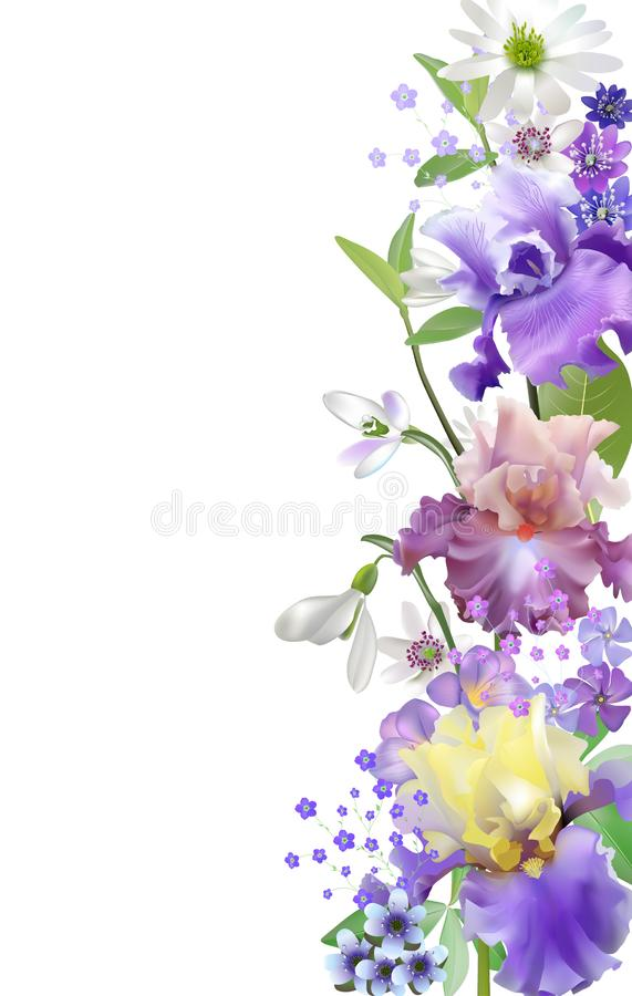 Vector botanical banner with irises and spring blue flowers. Floral design for natural cosmetics, couples and other women`s. Vector vintage botanical banners royalty free illustration