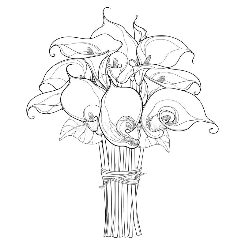 dead calla lily coloring pages