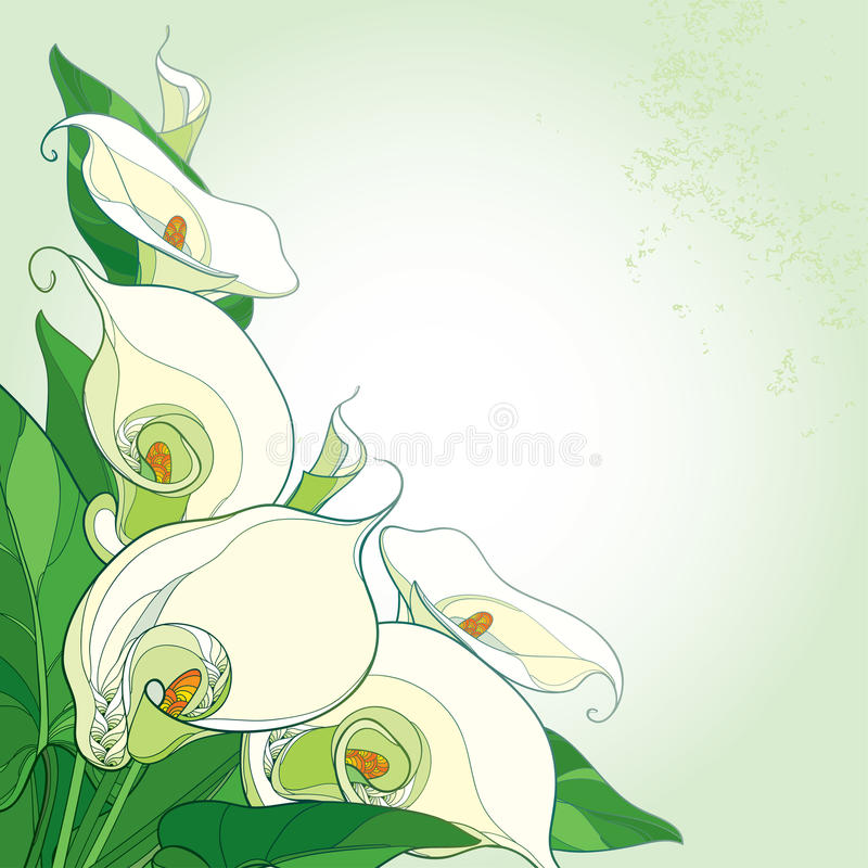 Vector bouquet with Calla lily flower or Zantedeschia on the pastel background. Corner composition in contour style with calla. Vector bouquet with Calla lily royalty free illustration