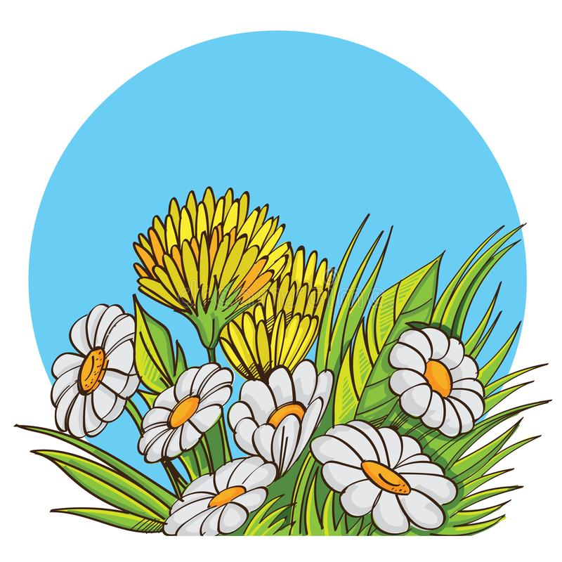 Vector bouquet of chamomile stock photos