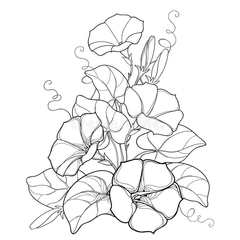 Vector bouquet with outline Ipomoea or Morning glory flower bell, leaf and bud in black isolated on white background. vector illustration