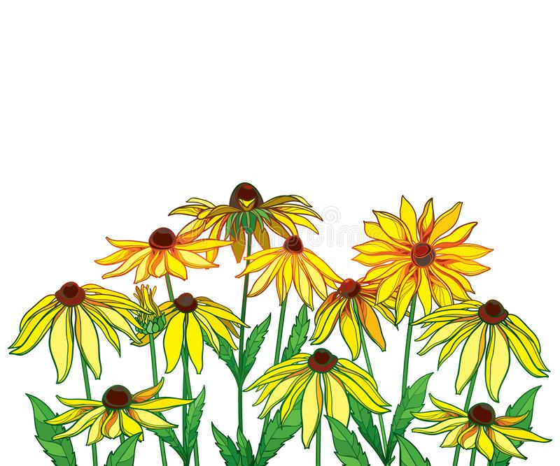 Vector bouquet with outline Rudbeckia hirta or black-eyed Susan flower, green leaf and bud in yellow isolated on white background. stock illustration