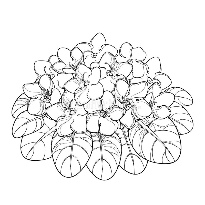 Vector bouquet with outline Saintpaulia or African violet flower and leaf in black isolated on white background. Viola flower. vector illustration
