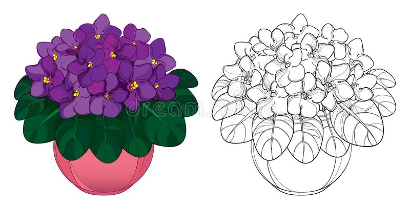 Vector bouquet with outline Saintpaulia or African violet flower in round pot. Purple flowers and foliage isolated on white. Vector bouquet with outline stock illustration