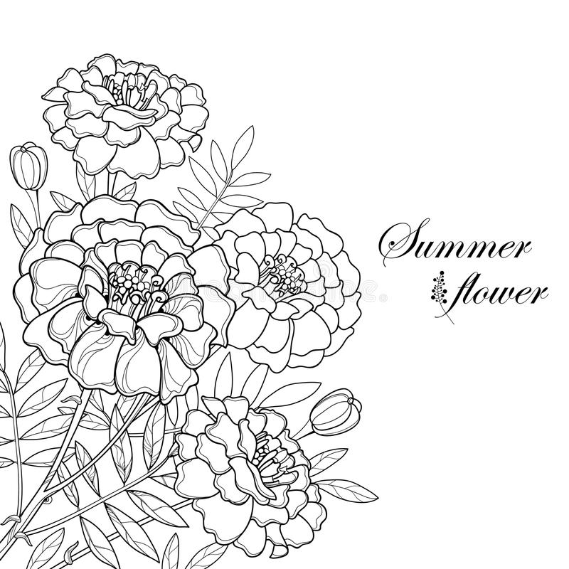 Vector bouquet with Tagetes or Marigold flower, bud and leaf in black isolated on white background. Ornate Marigold flowers. royalty free illustration