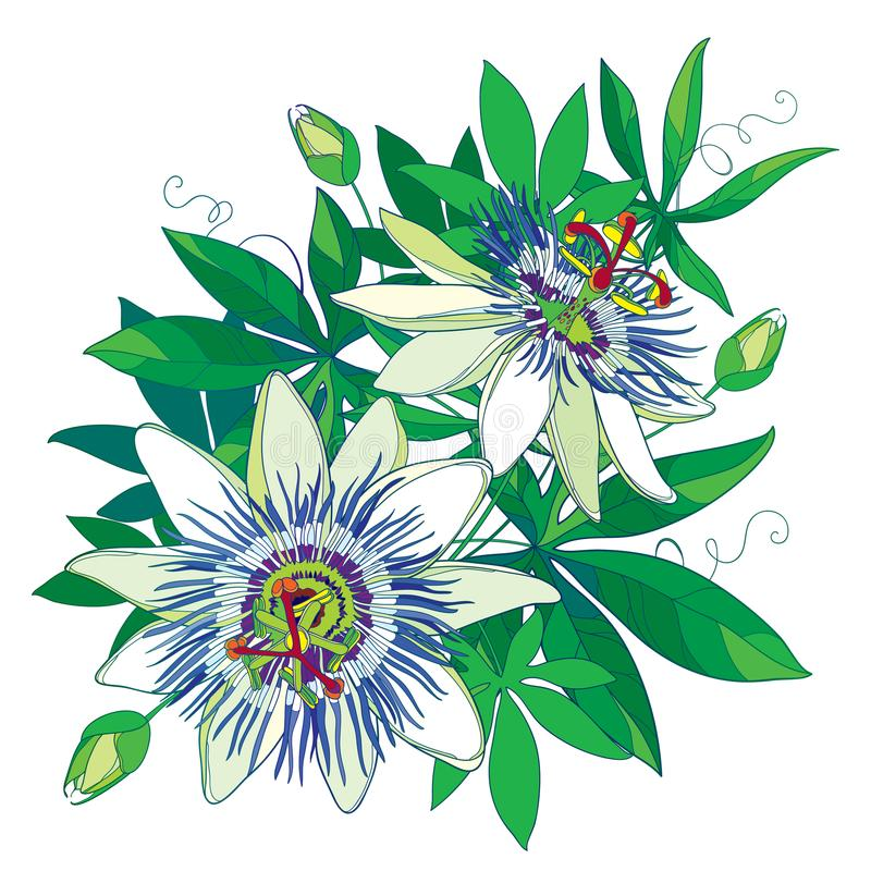 Vector Bouquet Of Tropical Blue Passiflora Or Passion Flower ...