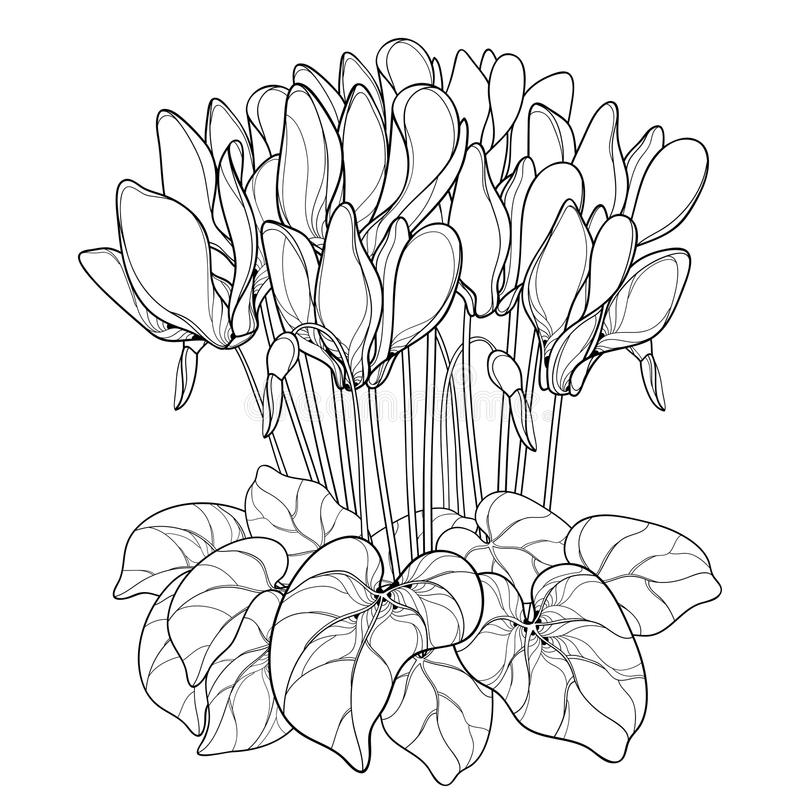 Free Vector Bouquet With Outline Cyclamen Or Alpine Violet Flower, Bud And Leaf In Black Isolated On White Background. Stock Photography - 100201472
