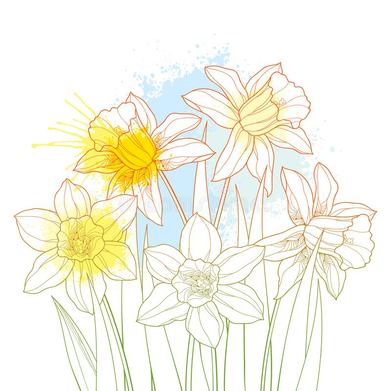 Free Vector Bouquet With Outline Narcissus Or Daffodil Flowers And Leaves In Pastel Yellow And Blue Isolated On White Background. Royalty Free Stock Photography - 175853927
