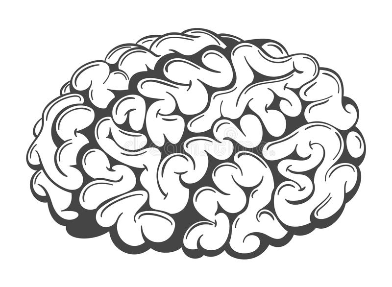 Vector Brain Drawing. Simple hand drawn vector human brain. Graphic sketchy brain isolated on white stock illustration