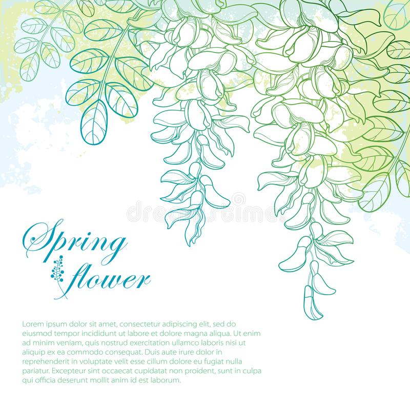 Vector branch of outline white false Acacia or black Locust or Robinia flower, bud and leaves on the pastel blue and green. Vector branch of outline white false vector illustration