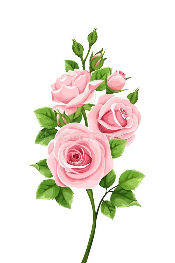 Branch of pink roses. Vector illustration. Vector branch of pink roses isolated on a white background stock illustration
