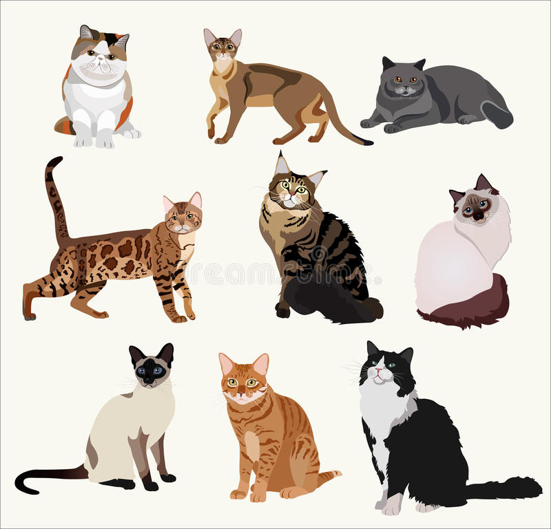 Vector Breed cats in different poses. Cartoon highly detailed pets. royalty free illustration