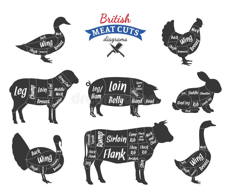 Vector British meat cuts diagrams. British cuts of beef, pork, lamb, rabbit, chicken, duck, goose and turkey diagrams stock illustration