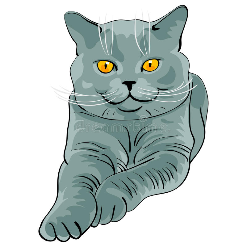 Vector British shorthair blue cat lies and looks royalty free stock photography