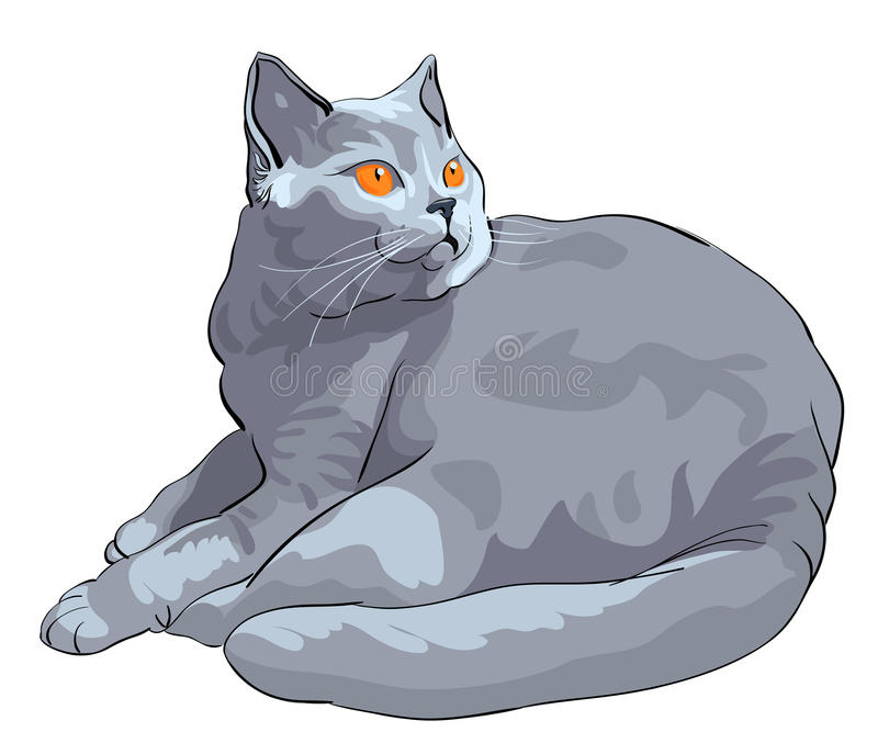 Vector British shorthair blue cat lies and looks stock photography