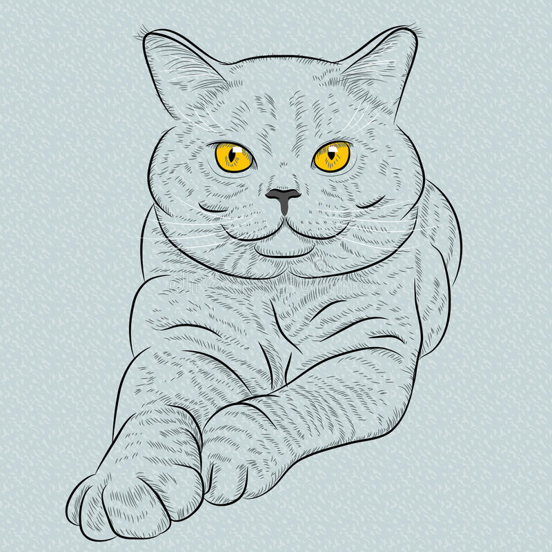 Vector British shorthair blue cat lies and looks stock images