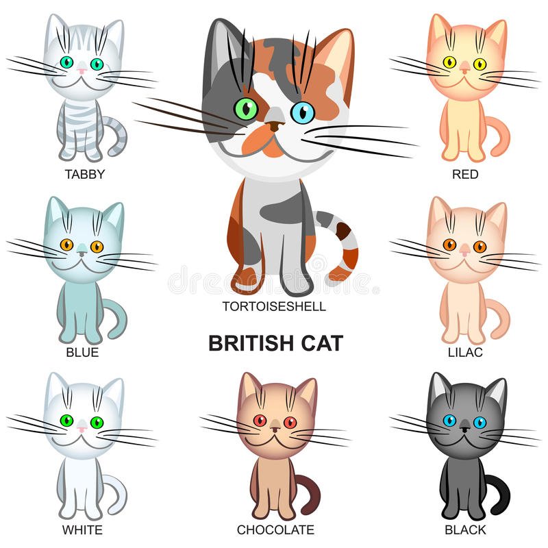 vector British Shorthair cats of various colors royalty free stock photos