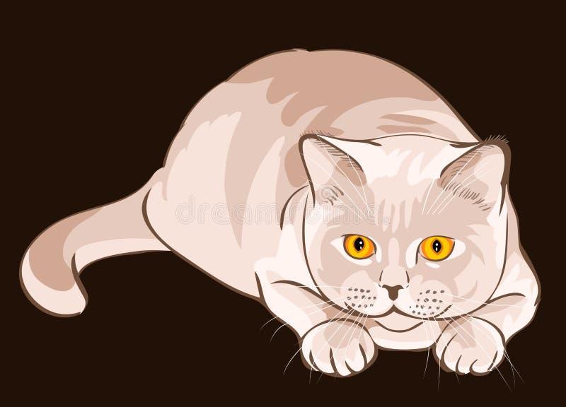 vector British shorthair lilac cat sits in ambush stock image